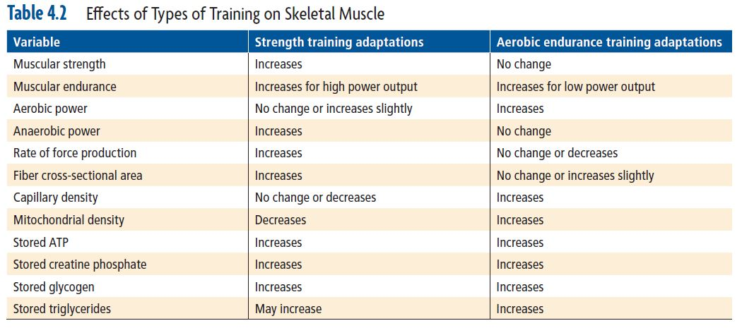 Effects of Types of Training on Skeletal Muscle