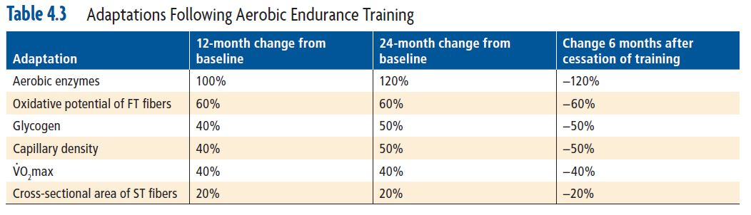 Adaptations Following Aerobic Endurance Training